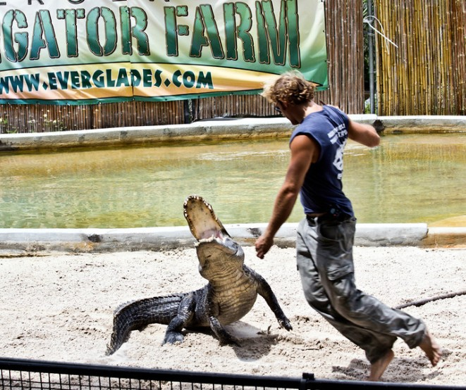 CrocodileHunting1Ef